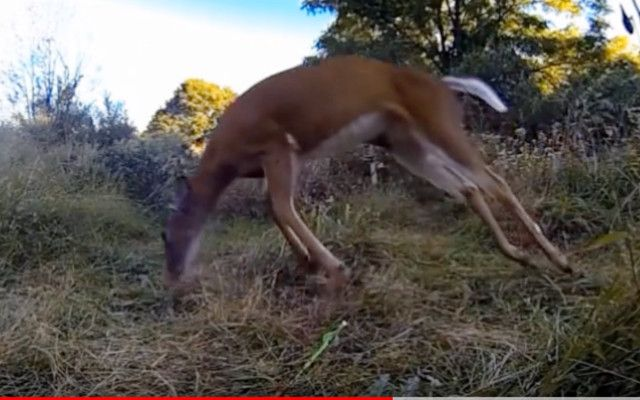 Bow Hunting Videos - Exit Shots  The field archer delivers quality bowhunting videos and here is another example using action cameras to capture the pass-through exit shots.    You can almost feel the experience when watching his unique bow hunting videos which setshim apart from other hunting videos. Check out this great video and if you haven't already,go ahead and subscribe to The Field Archer Channel for more up to date hard hitting bow hunting videos.       Share this video ...
