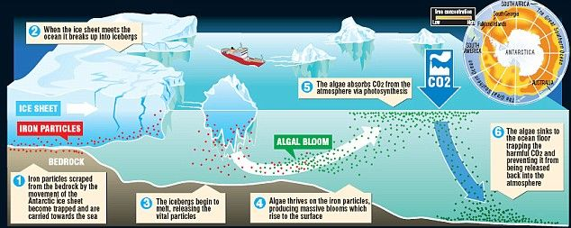 Amazing discovery of green algae which could save the world from global warming
