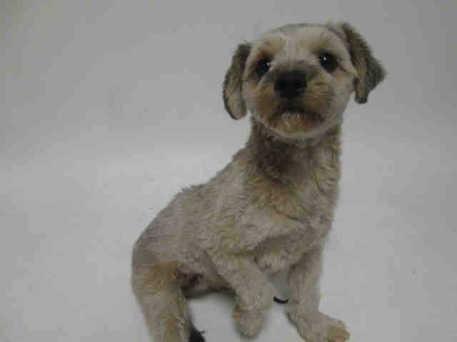 Pin by San Antonio Humane Society on SAHS Dogs Dog