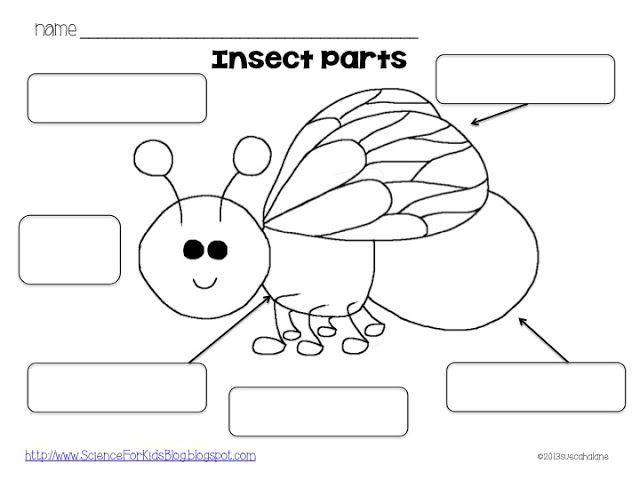 Worksheet Free Insect Worksheets Grade 1 30 best insects images on pinterest teaching science for kids insect body parts page to go with the shrinky dinks