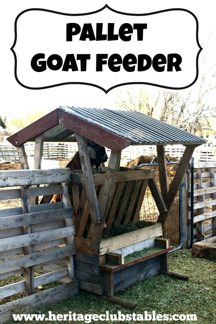 Having a goat feeder that wastes as little hay as possible is so important! Read more on How to Build a Goat Feeder Using Pallet Boards