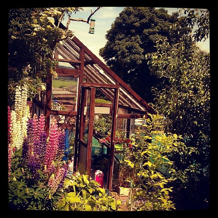greenhouse allotment