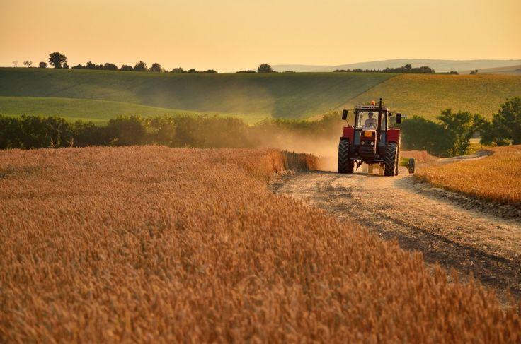 Menneskenes endring av naturen og jordas ressurser truer framtidens landbruk. Så hvordan skal den sårbare matproduksjonen best foregå på lang sikt når jordas befolkning øker?
