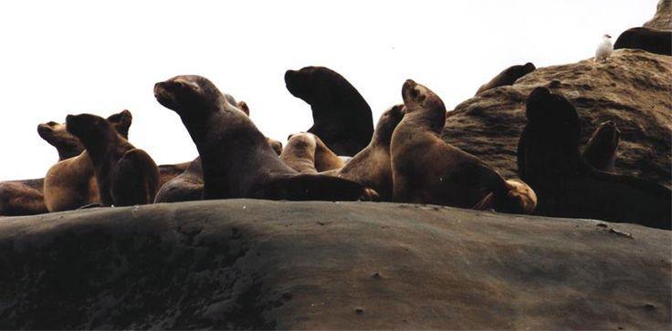 El Parque Nacional Monte León conforma una de las principales reservas más extraordinarias de la provincia de Santa Cruz.