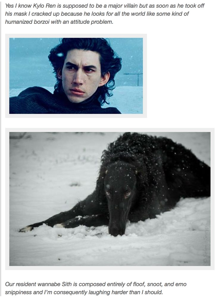Kylo Ren look slike some kind of humanized borzoi with an attitude problem.