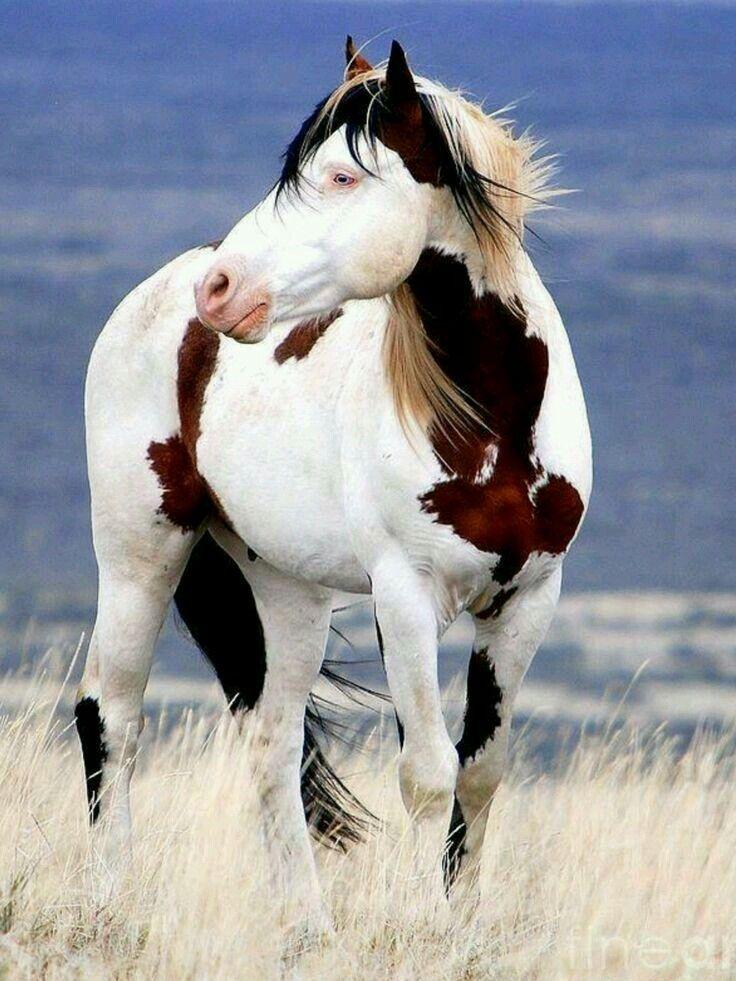 Pferd – Alle (domestiziert)   – Horses