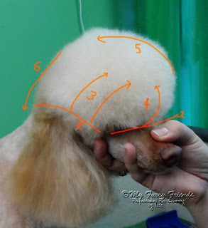 For Poodle moms & dads. Pet Grooming: The Good, The Bad, & The Furry: Scissoring a Poodle Topknot...