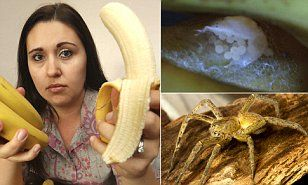 Brazilian wandering spider eggs found in Tesco bananas #DailyMail