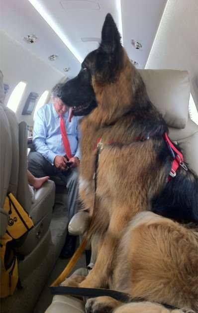Hope it's First Class, so deserved ~ Our MilitaryDog. #germanshepherd #dog