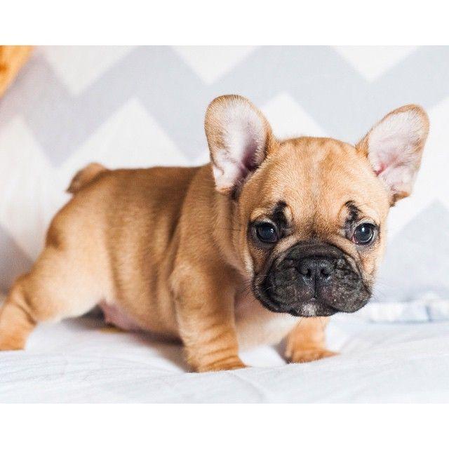 National Puppy Day, whutup.  #nationalpuppyday by huckandgus http://ift.tt/1DYiCGP