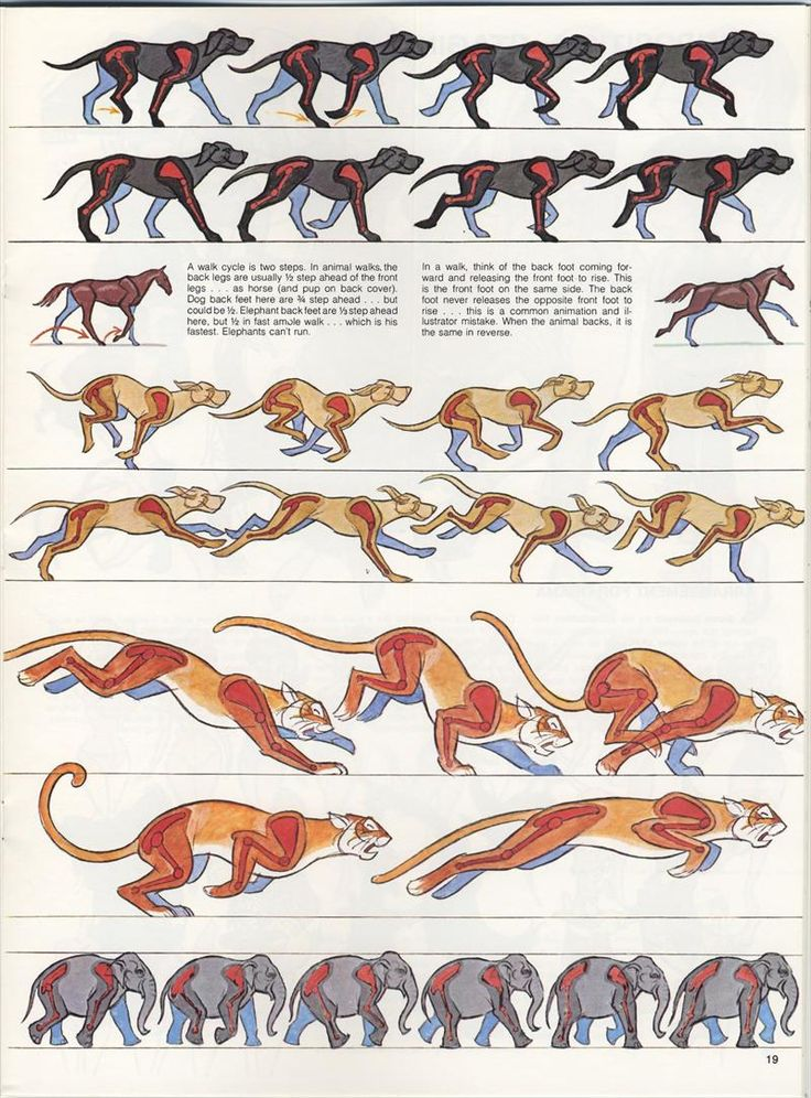 Animating a quadruped | Tim's Animation Mentor Blog