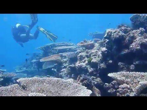 A espetacular Grande Barreira de Corais da Austrália - Viagem & Gastronomia