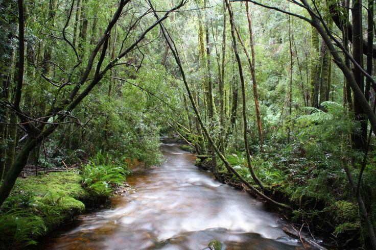 West Coast Tasmania. Long exposure of river at Nelson Falls