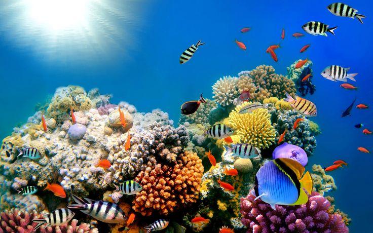 Rạn san hô lớn nhất thế giới đang chết dần | Mạng Thủy sản Việt Nam