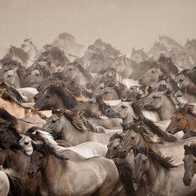#SaveAmericasMustangs Wild Horses