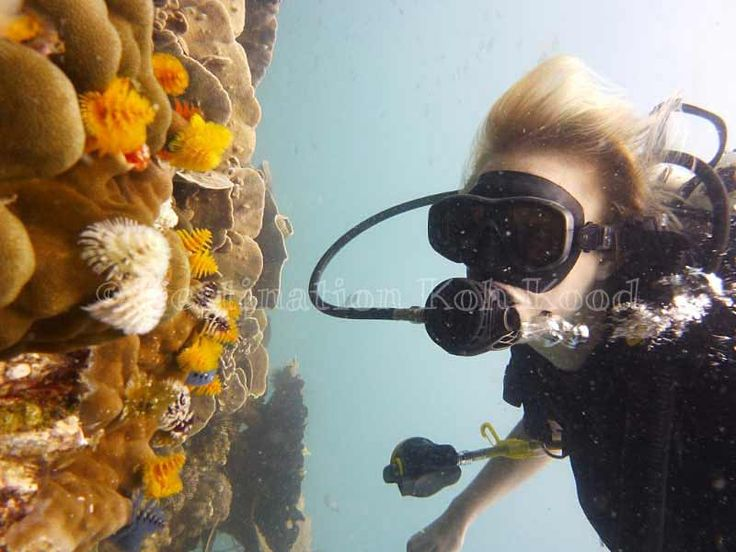 Watching beautiful corals with Paradise Divers @ Koh Kood (Thailand)