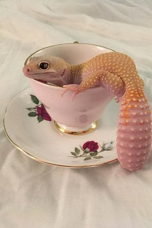 They can be glam AF. | 23 Pictures That Prove Lizards Are Very Good Boys