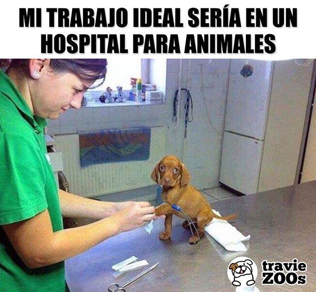 Aunque No Soportaria Verlos Sufrir Hospital Veterinario Doctor Love Animals Mascotas Pet Perros Y Gatos Tiernos Perros Tiernos Dibujos Perritos Tiernos