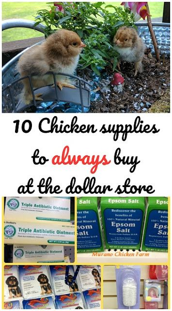 10 Chicken supplies that you can buy at the dollar store and save a ton of money.