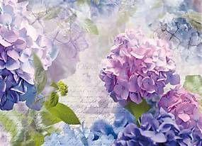 Fototapeta, rozmer 368 cm x 254 cm, kvety, Komar 8-705