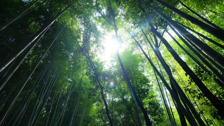Arashiyama , the path of bamboo