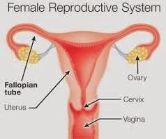 Overcome Female Infertility  Human Menopause Gonadotrophins (HMG) In Conventional Medicine