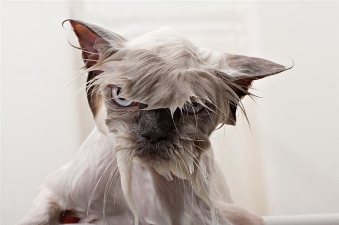 15 Reasons Why Wet Cats Are Hilarious 2 - https://www.facebook.com/diplyofficial