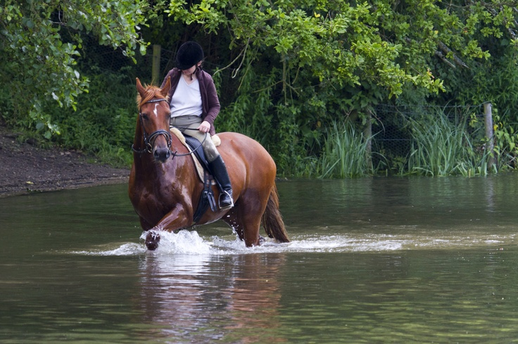 Horse Play: Horses Plays, Hors Outdoor, Hors Plays, Photo, Plays Hors