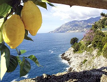Sorrento, Italy - Oh, the limoncello I would make.