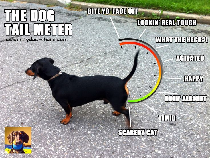 The Dog Tail Meter