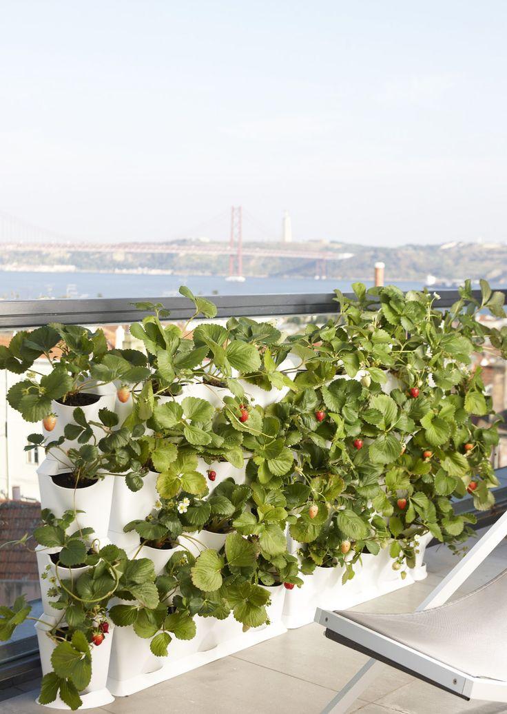 37 best vertikaler garten images on pinterest gutter garden herb garden planter and plant. Black Bedroom Furniture Sets. Home Design Ideas