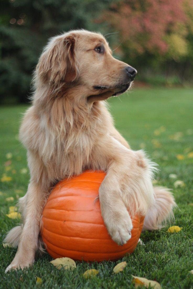 ...I've picked MY pumpkin...