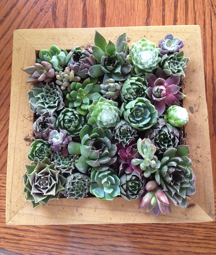 Recycle Reuse Renew Mother Earth Projects: How To Make Your Own Living  Succulent Garden