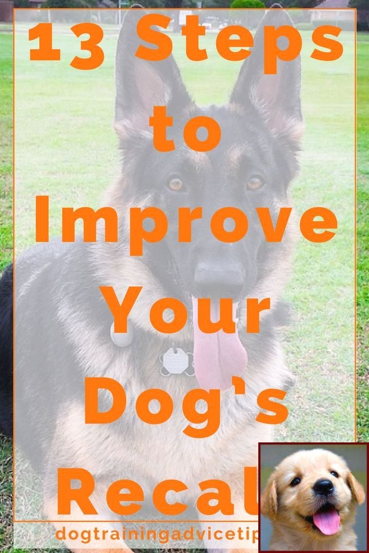 Dog Behavior Vs Cat Behavior And Clicker Dog Training Petsmart