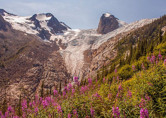 Mountain Photography, Rocky Mountains, Landscape Image, Wall Decor, Wild Flowers, Warm Fall Colors, Pink, Nature, Art, Glacier, Canada