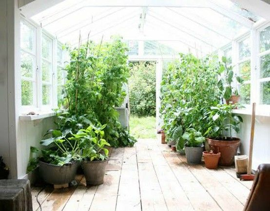 I want a greenhouse SOOOOOOO badly. The hubs is hesitant. I think it's because he is afraid I would never come out of it and he would have to cook for himself!!!!!!!