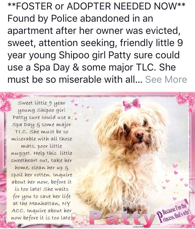 Patty Safe 04 2018 Needs Help Dog Safe Find Pets Dog Photography