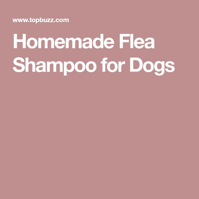 Homemade Flea Shampoo for Dogs