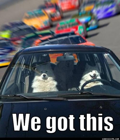 nascar???: Dads Jokes, Dads Funny, Funny Dogs, Dogs Lol, Funny Stuff, Dogs Trips, Dogs Pictures, Funny Memes, Animal