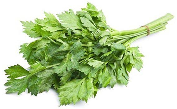Leafy Chinese Celery Seed Packet Apium Graveolens Var Etsy In 2021 Chinese Celery Herbs Celery Plant