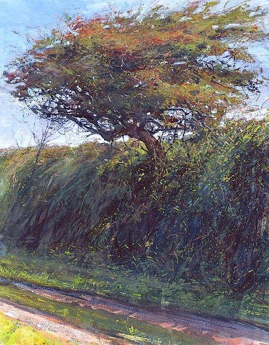 Tresidder Hawthorn in September By Paul Lewin