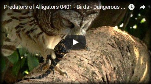 Beautifulplace4travel: Birds - Dangerous Animals