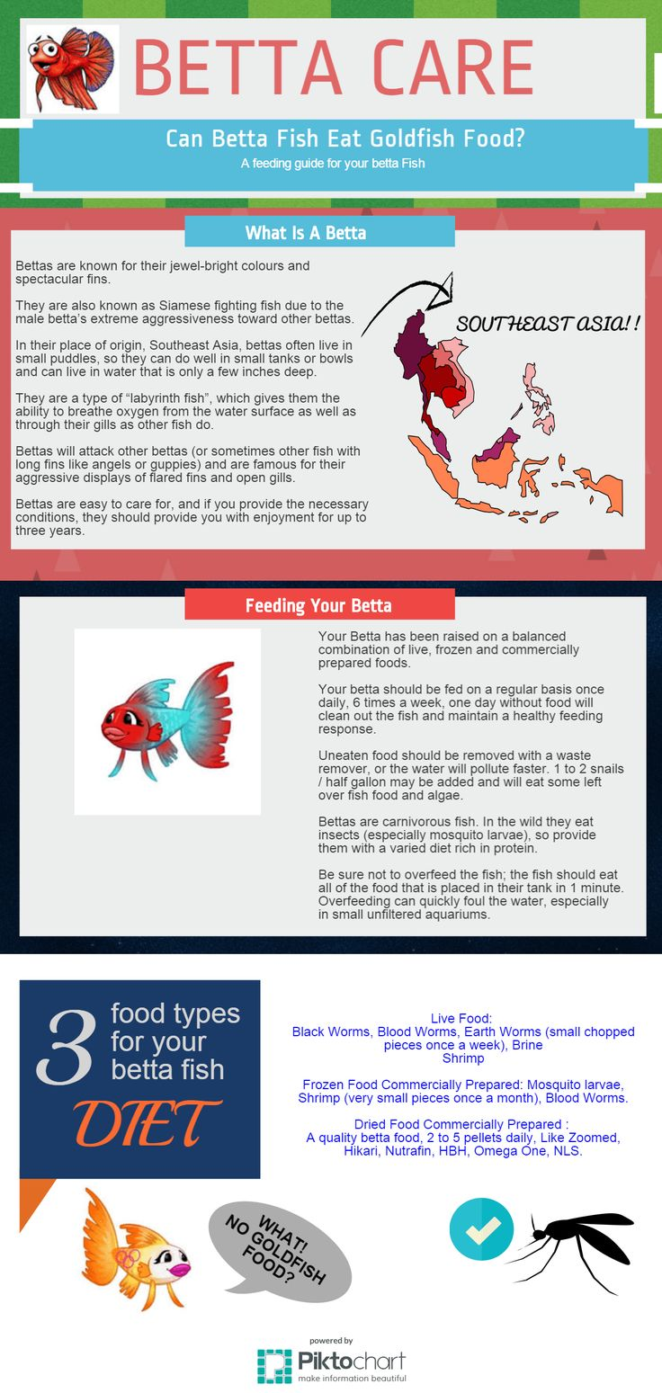Betta Feeding Guide: Should you feed goldfish food to a Betta? Pin this Betta Care infographic and share how to really keep your Betta happy and healthy.