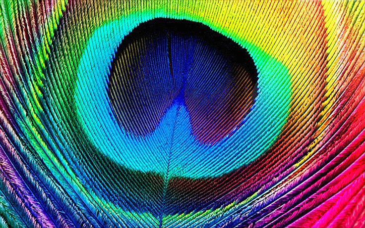 peacockeffect.jpg (1919×1204): Peacock Feathers, Art Crafts, God Is, Rainbows Colors, Peacock Crafts, So Pretty, Phones Wallpapers, Peacock Colors, Be Awesome