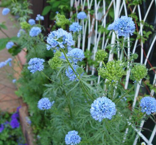春花壇をイメージして花壇作り | キヨミのガーデニングブログ 長澤淨美のアメブロオフィシャルブログPowered by Ameba