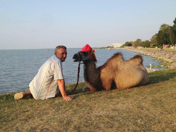 Tevegelés egy lovastáborban ráadásul a Balaton partján!