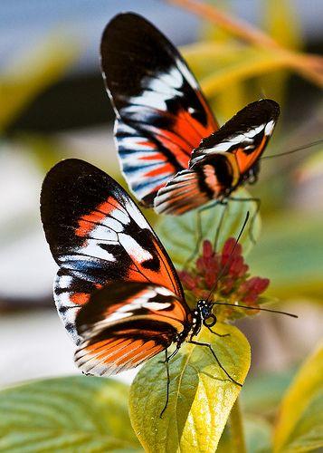 Si vas al següent enllaç hi trobaràs un munt de fotografies http://pinterest.com/gemmacamps/papallones-mariposas-butterflies/
