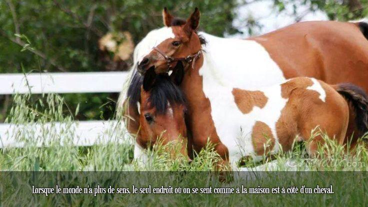 Lorsque le monde n'a plus de sens, le seul endroit où on se sent comme à la maison est à côté d'un cheval.