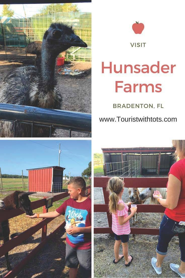 Animal Admirer? Visit Hunsader Farms In Bradenton, Florida