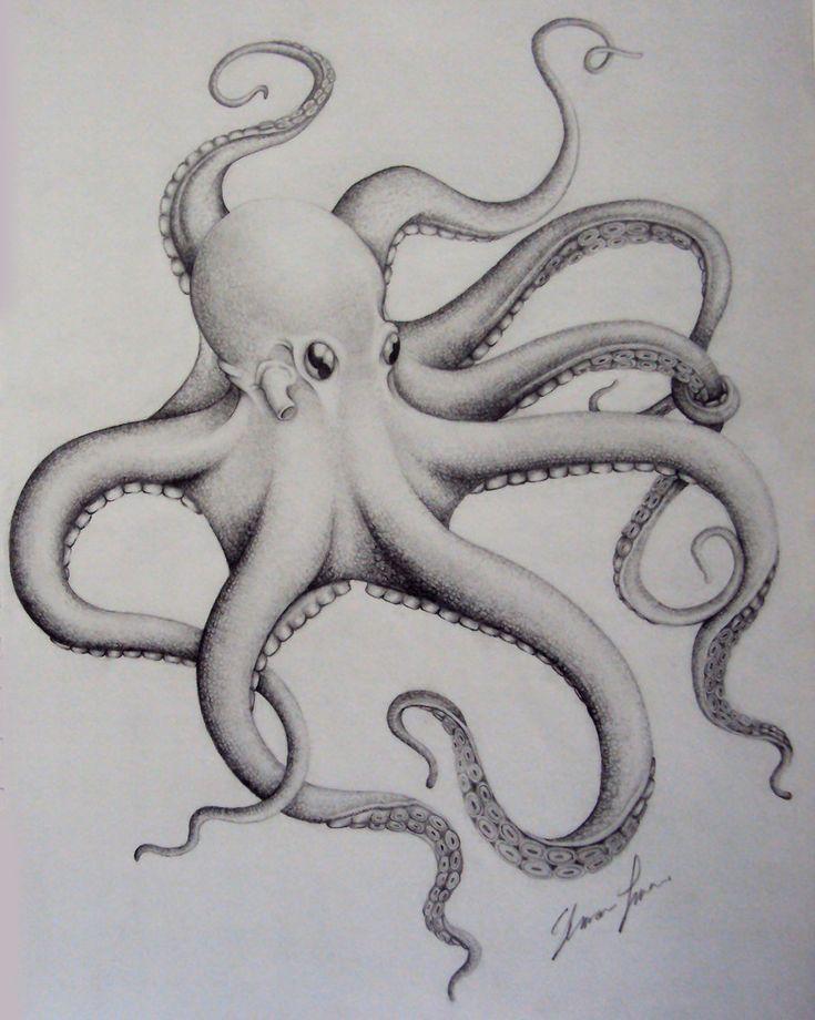 Octopus by THE-RAttie.deviantart.com on @deviantART